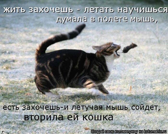 Котоматрица: жить захочешь - летать научишься думала в полете мышь, есть захочешь-и летучая мышь сойдет, вторила ей кошка