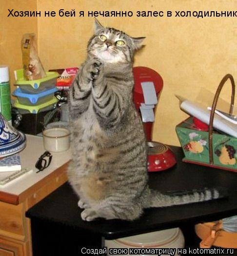 Котоматрица: Хозяин не бей я нечаянно залес в холодильник