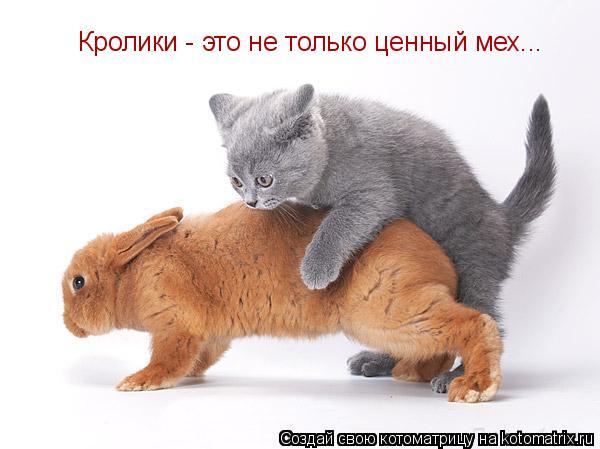Котоматрица: Кролики - это не только ценный мех...