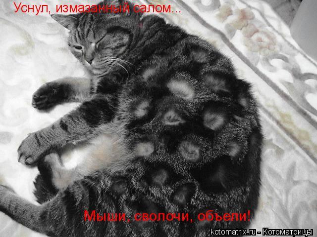 Котоматрица: Уснул, измазанный салом... Мыши, сволочи, объели!