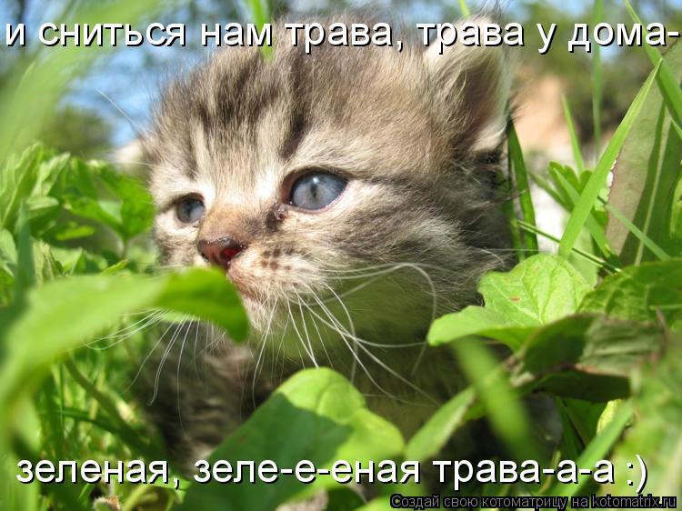 Котоматрица: и сниться нам трава, трава у дома-а-а,  и сниться нам трава, трава у дома-а-а,  зеленая, зеле-е-еная трава-а-а :)