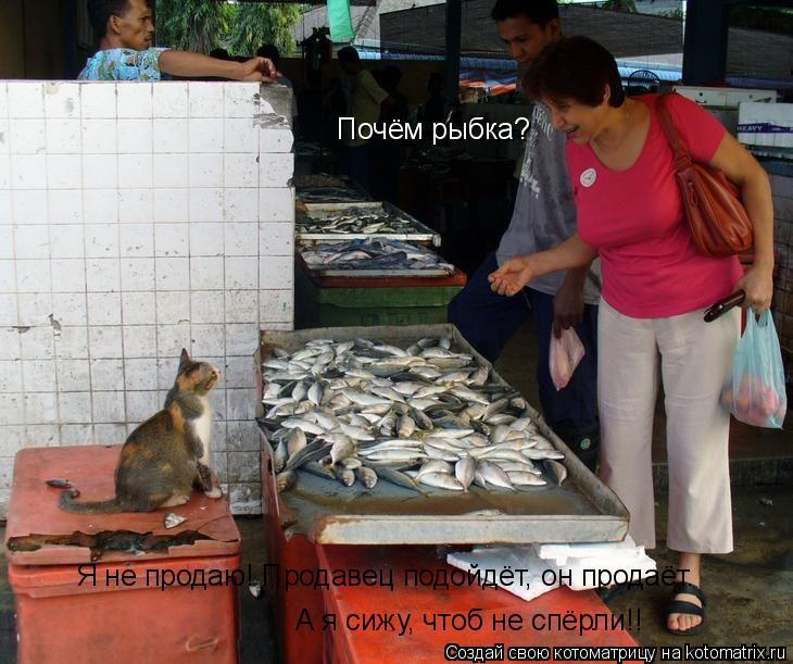 Котоматрица: Почём рыбка? Я не продаю! Продавец подойдёт, он продаёт.  А я сижу, чтоб не спёрли!!