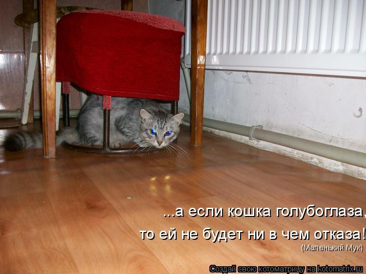 Котоматрица: ...а если кошка голубоглаза,  то ей не будет ни в чем отказа! (Маленький Мук)