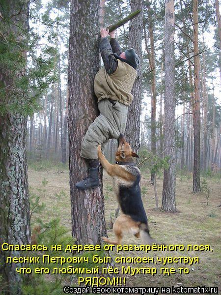 Котоматрица: лесник Петрович был спокоен,чувствуя  что его любимый пёс Мухтар где то Спасаясь на дереве от разъярённого лося, РЯДОМ!!!