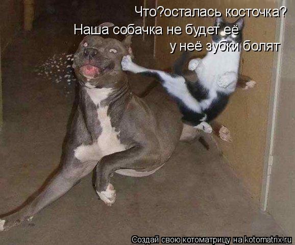 Котоматрица: Что?осталась косточка? Наша собачка не будет её  у неё зубки болят
