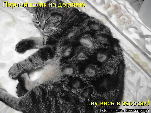 Котоматрица: Первый котик на деревне ...ну весь в засосах!