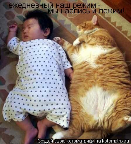 Котоматрица: ежедневный наш режим -  мы наелись и лежим!