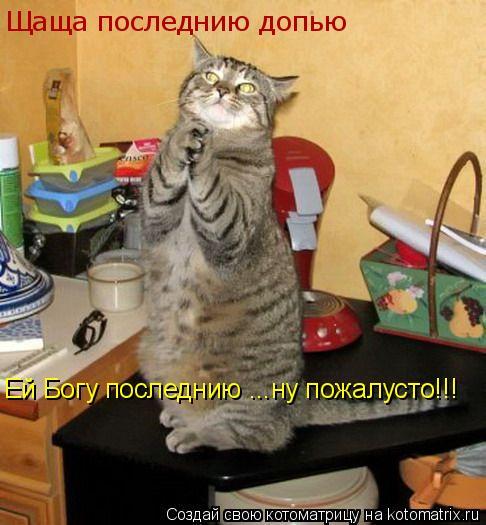 Котоматрица: Щаща последнию допью Ей Богу последнию ...ну пожалусто!!!