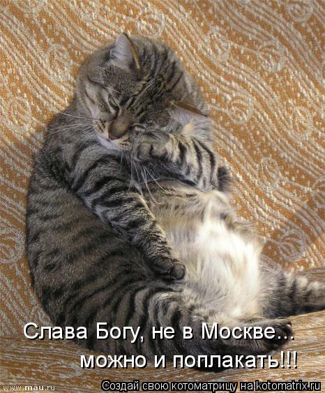 Котоматрица: Слава Богу, не в Москве...  можно и поплакать!!!