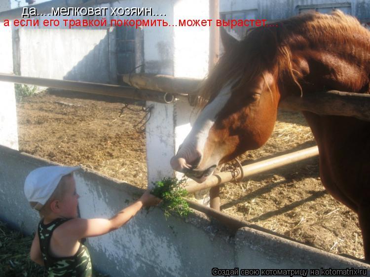 Котоматрица: да....мелковат хозяин.... а если его травкой покормить...может вырастет....
