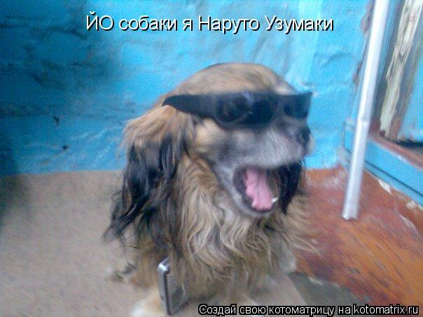 Котоматрица: ЙО собаки я Наруто Узумаки