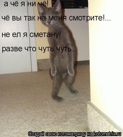 Котоматрица: а чё я ни чё! не ел я сметану! разве что чуть чуть... чё вы так на меня смотрите!...
