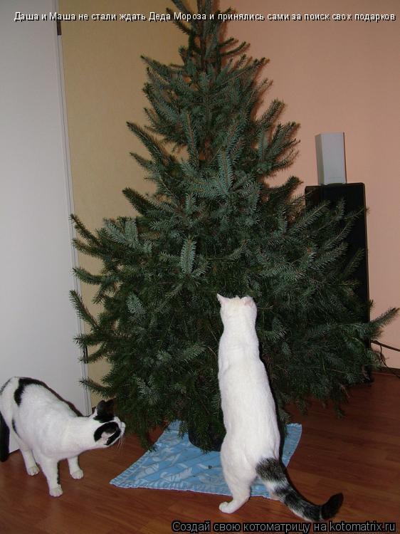 Котоматрица: Даша и Маша не стали ждать Деда Мороза и принялись сами за поиск свох подарков