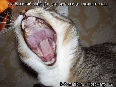 Котоматрица: Кот Василий орал так, что было видно даже гланды