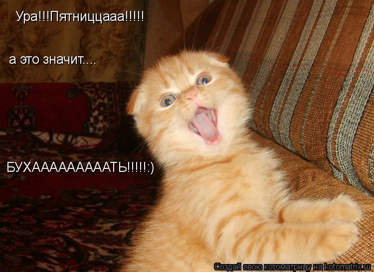 Котоматрица: Ура!!!Пятниццааа!!!!! а это значит.... БУХАААААААААТЬ!!!!!:)