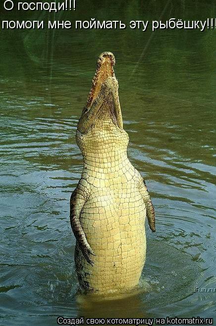 Котоматрица: О господи!!!  помоги мне поймать эту рыбёшку!!!