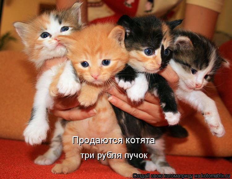 Котоматрица: Продаются котята три рубля пучок