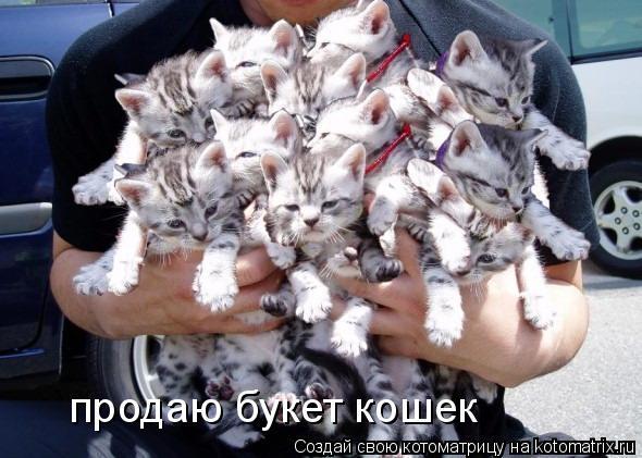 Котоматрица: продаю букет кошек
