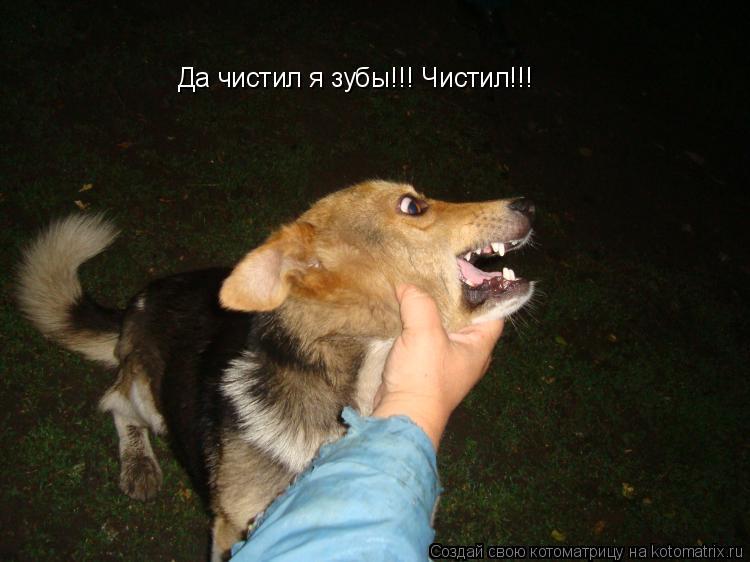 Котоматрица: Да чистил я зубы!!! Чистил!!!