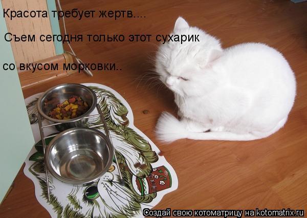 Котоматрица: Красота требует жертв.... Съем сегодня только этот сухарик со вкусом морковки..