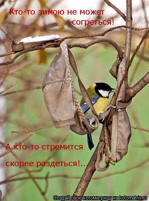 Котоматрица: Кто-то зимою не может  согреться! А кто-то стремится скорее раздеться!...