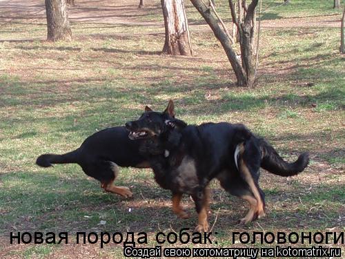 Котоматрица: новая порода собак:  головоноги