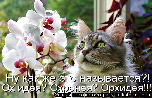Котоматрица: Ну как же это называется?! Ох идея? Охренея? Орхидея!!!