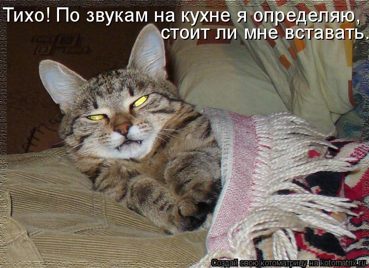 Котоматрица: Тихо! По звукам на кухне я определяю, стоит ли мне вставать.