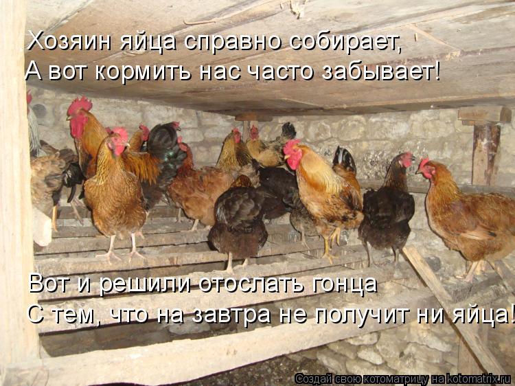 Котоматрица: С тем, что на завтра не получит ни яйца! Хозяин яйца справно собирает, А вот кормить нас часто забывает!  Вот и решили отослать гонца