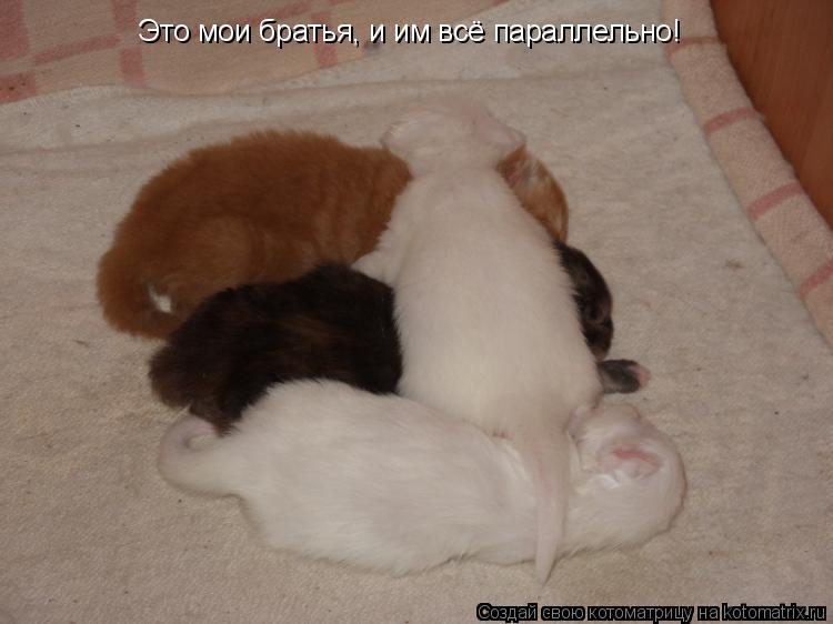 Котоматрица: Это мои братья, и им всё параллельно!