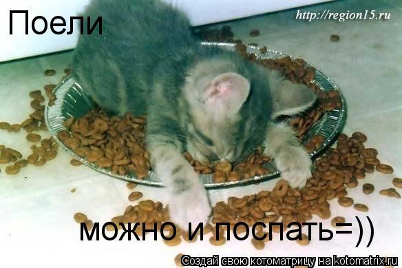 Котоматрица: Поели можно и поспать=))