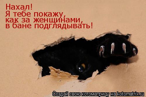 Котоматрица: Нахал! Я тебе покажу, как за женщинами, в бане подглядывать!