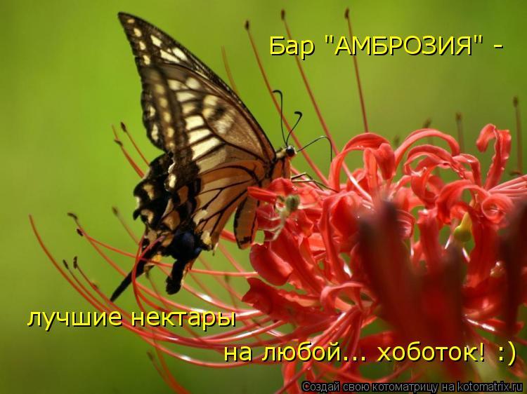 "Котоматрица: Бар ""АМБРОЗИЯ"" -  лучшие нектары  на любой... хоботок! :)"