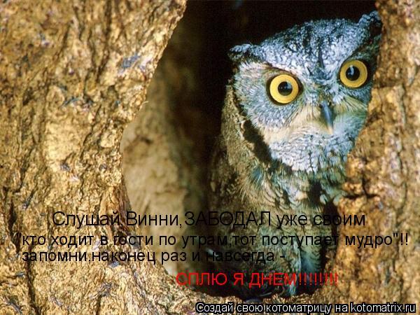 """Котоматрица: Слушай,Винни,ЗАБОДАЛ уже своим  """"кто ходит в гости по утрам,тот поступает мудро""""!! запомни,наконец раз и навсегда -  СПЛЮ Я ДНЕМ!!!!!!!!"""