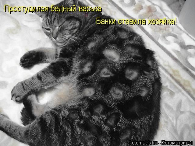 Котоматрица: Простудился бедный васька Банки ставила хозяйка!
