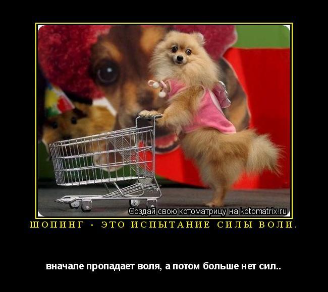 Котоматрица: шопинг - это испытание силы воли. вначале пропадает воля, а потом больше нет сил..