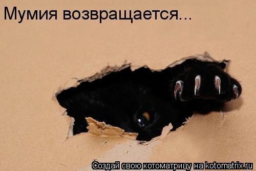 Котоматрица: Мумия возвращается...