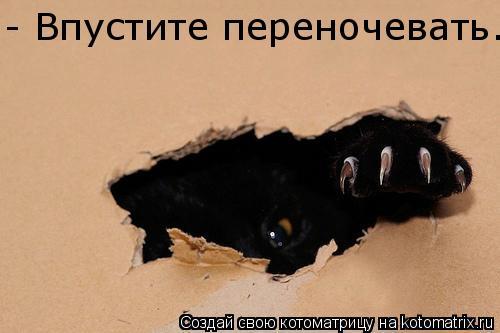 Котоматрица: - Впустите переночевать.