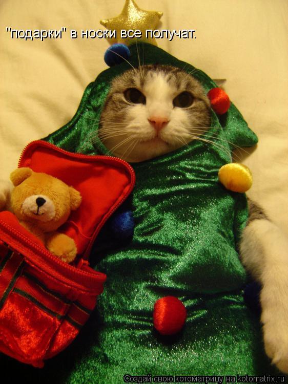 """Котоматрица: """"подарки"""" в носки все получат."""