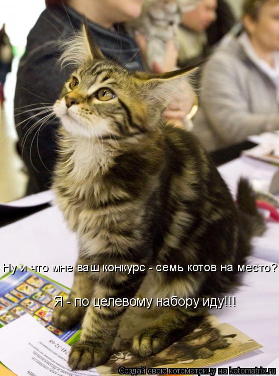 Котоматрица: Я - по целевому набору иду!!! Ну и что мне ваш конкурс - семь котов на место?
