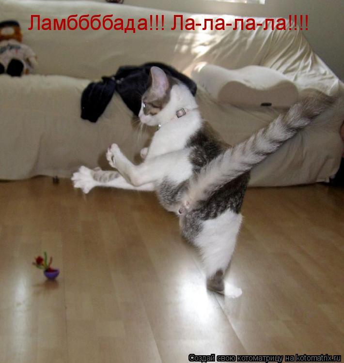 Котоматрица: Ламббббада!!! Ла-ла-ла-ла!!!!