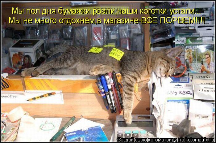 Котоматрица: Мы пол дня бумажки рвали,наши коготки устали... Мы не много отдохнём,в магазине-ВСЕ ПОРВЕМ!!!!