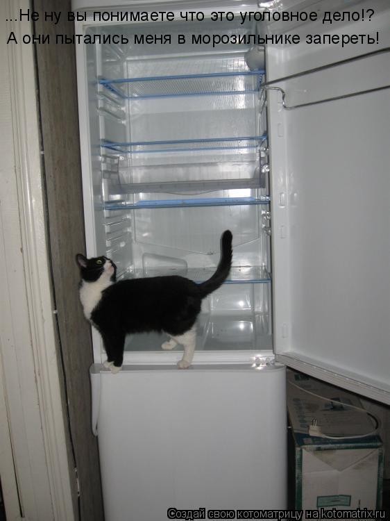 Котоматрица: ...Не ну вы понимаете что это уголовное дело!? А они пытались меня в морозильнике запереть!