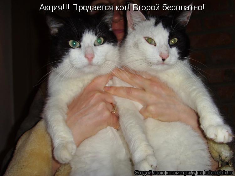 Котоматрица: Акция!!! Продается кот! Второй бесплатно!