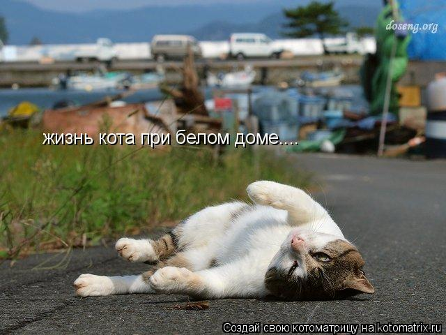 Котоматрица: жизнь кота при белом доме....