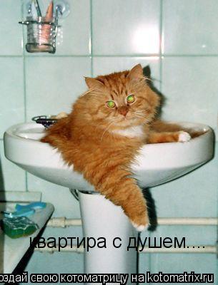 Котоматрица: квартира с душем....