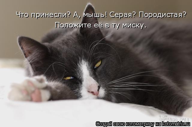 Котоматрица: Что принесли? А, мышь! Серая? Породистая? Положите её в ту миску.