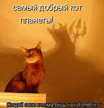 Котоматрица: самый добрый кот  планеты !