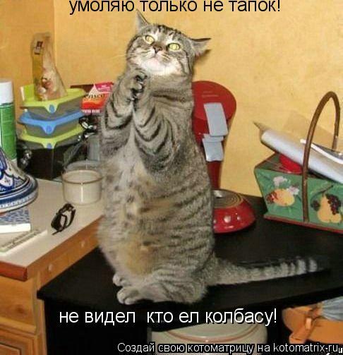 Котоматрица: умоляю только не тапок! не видел  кто ел колбасу!
