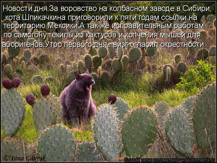 Котоматрица: кота Шпикачкина приговорили к пяти годам ссылки на  территорию Мексики.А так же исправительным работам по самогону текилы из кактусов и ко